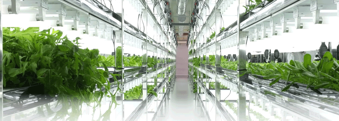 Horticultural Biotechnology Research