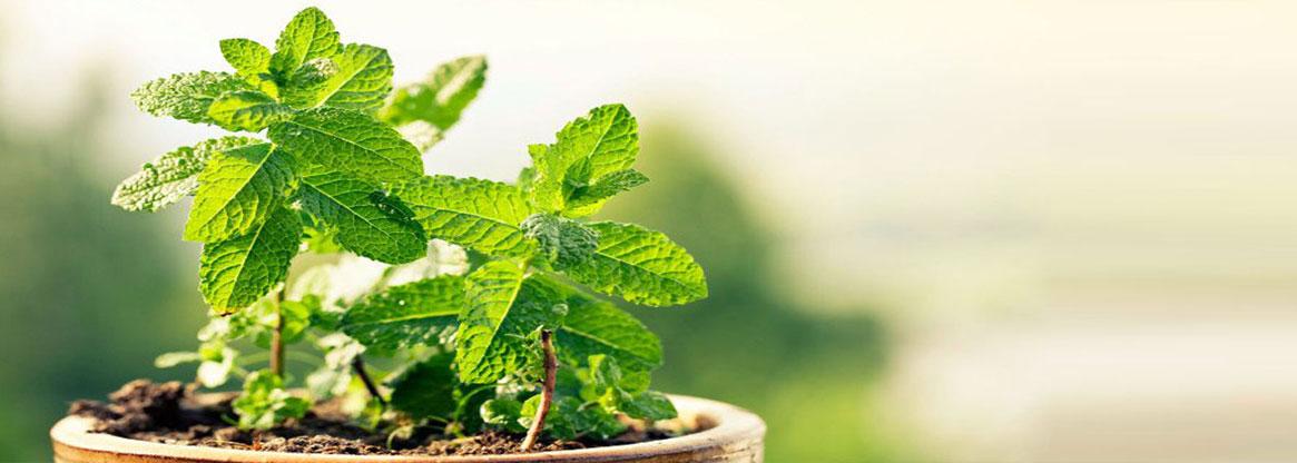 Journal of Medicinal Botany